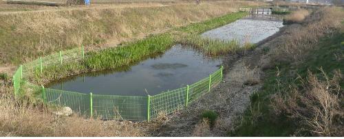 잘 흐르고 있는 하천을 막고 만든 연못. 식물의 성장이 활발한 시기에는 수질을 정화하는 효과가 다소 있지만 성장기가 지나면 사체와 분비물이 축적하면서 수질을 악화하고 하천의 생태를 훼손한다.