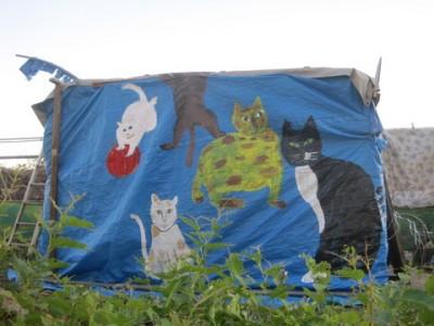 아라강 야숙지 근처 고양이집 - 오가와씨가 찍은 사진