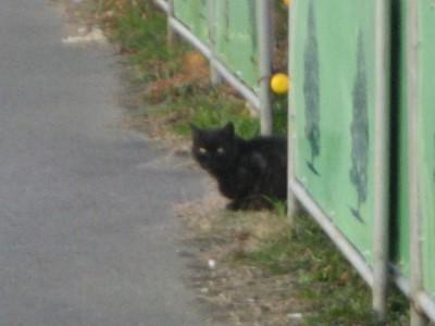아라강 주변에서 만난 들고양이