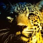 jaguar_background_wallpaper-normal